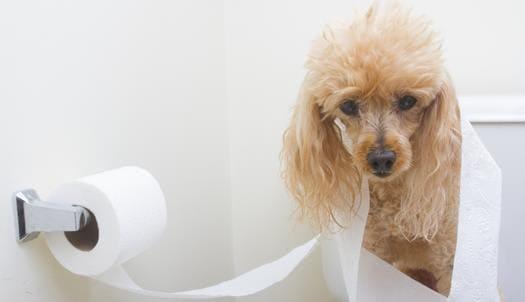 Что делать дома, если у собаки понос