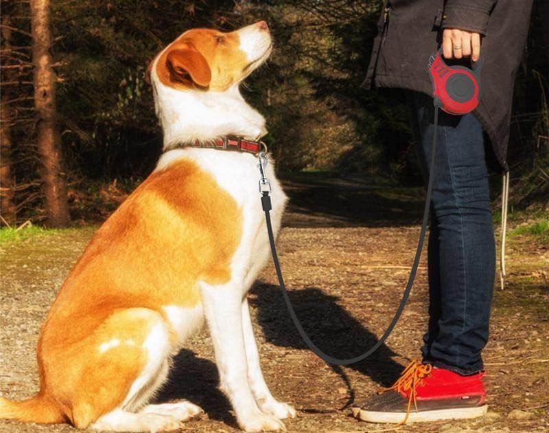 Хозяин дрессирует собаку на улице