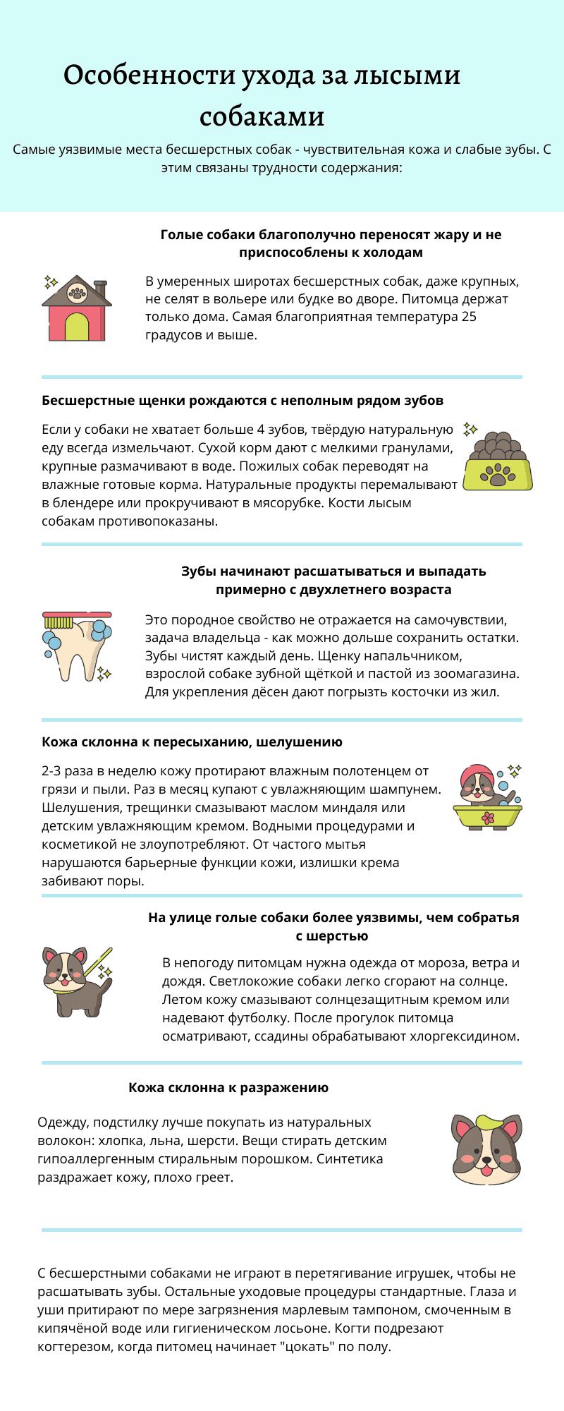 Инфографика: уход за лысыми собаками