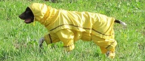 Собака в комбинезоне для защиты от клещей и профилактики пироплазмоза