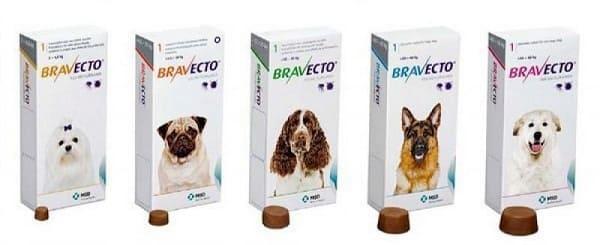 Таблетки Бравекто для профилактики пироплазмоза у собак