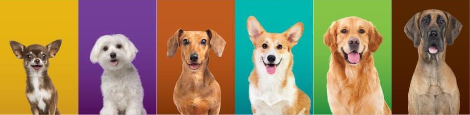 Симпарика для собак: преимущества и недостатки по отзывам