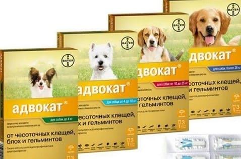 Капли на холку Адвокат для лечения отодектоза у собак
