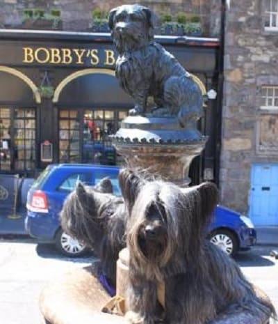 2 скай терьера на фоне памятника Бобби