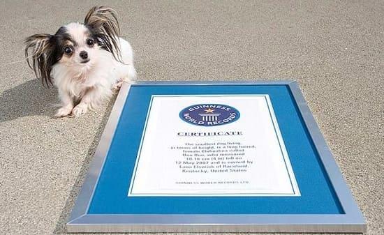 Бу бу: самая миниатюрная собачка с 2007 до 2014 года