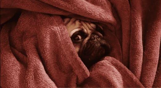 Первая помощь собаке при низкой температуре