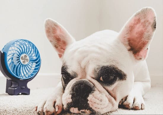 Первая помощь собаке при температуре выше нормы