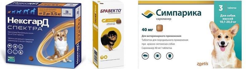 Таблетки Нексгард Спектра, Бравекто, Симпарика для лечения и профилактики саркоптоза у собак