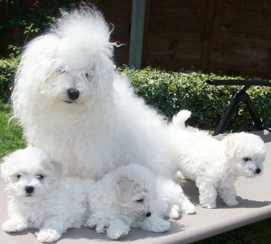 Болоньез со щенками